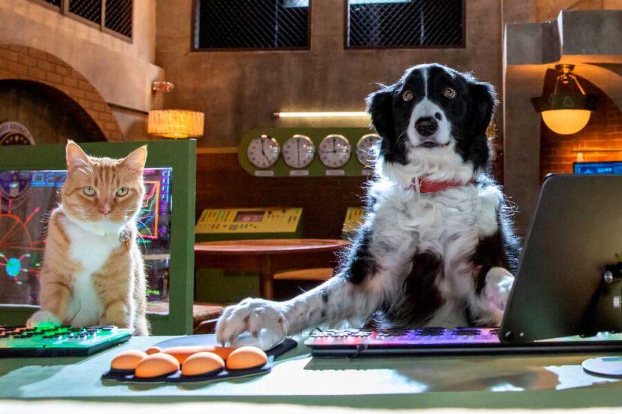 Psy i koty 3: Łapa w łapę / 12-15 listopada 16:00